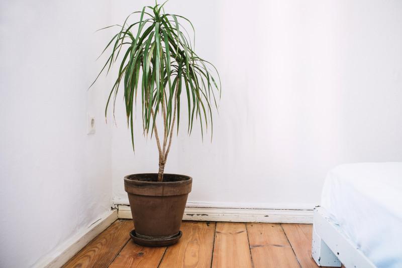 Super Je planten water geven tijdens een vakantie? Zo doe je dat! - Tips DS-91